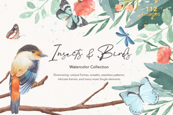 Insects & Birds Watercolor Collections Graphic Illustrations By WatercolorEps