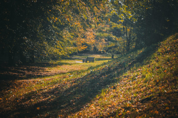 Print on Demand: Autumn in the City Park Graphic Nature By Кирилл Белый