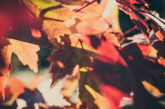 Print on Demand: Autumn Red Leaves Graphic Nature By Кирилл Белый