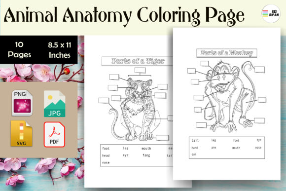 - 1 Animal Anatomy Coloring Page Designs & Graphics