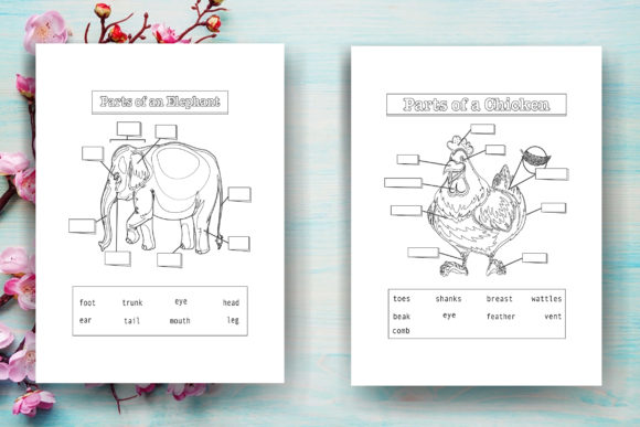 - Animal Anatomy Coloring Page - KDP (Graphic) By Sei Ripan · Creative Fabrica