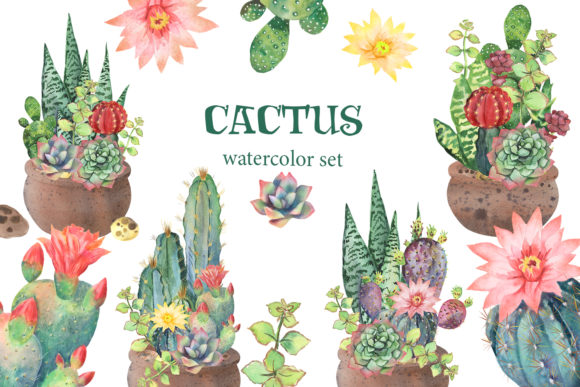 Cactus Watercolor Clipart, Succulents Graphic Illustrations By EvArtPrint