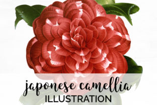Camellia Clipart Flowers Vintage Graphic Illustrations By Enliven Designs