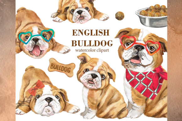 Cute English Bulldog Watercolor Clipart Grafik Illustrationen von EvArtPrint