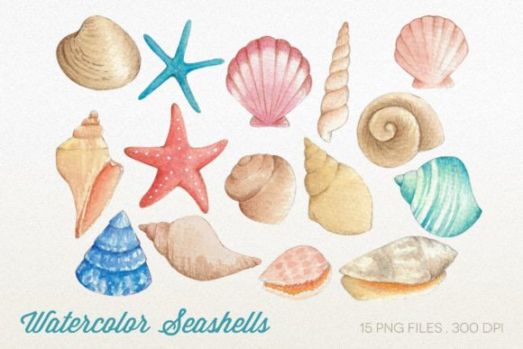 Watercolor Seashells Clipart PNG Graphic Illustrations By peachycottoncandy
