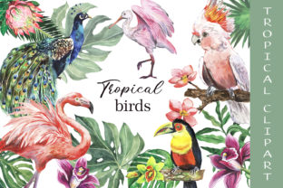 Tropical Birds Watercolor Clipart Graphic Illustrations By EvArtPrint 1