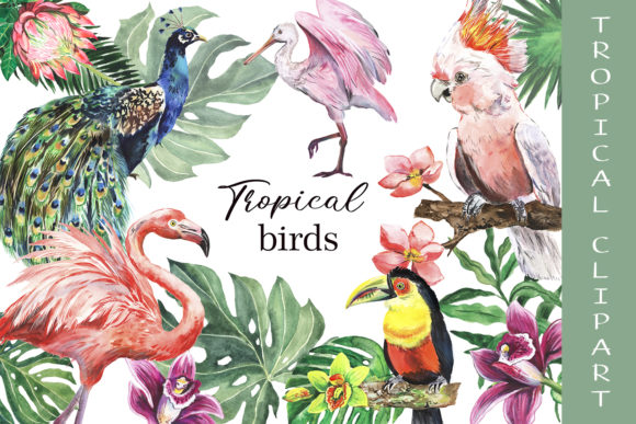 Tropical Birds Watercolor Clipart Graphic Illustrations By EvArtPrint