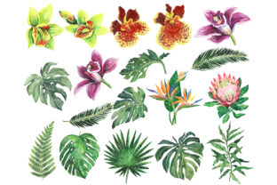 Tropical Birds Watercolor Clipart Graphic Illustrations By EvArtPrint 2
