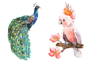 Tropical Birds Watercolor Clipart Graphic Illustrations By EvArtPrint 3