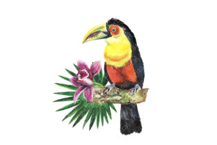 Tropical Birds Watercolor Clipart Graphic Illustrations By EvArtPrint 5