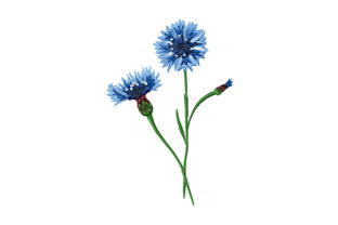 Print on Demand: Bouquet of Cornflowers Bouquets & Bunches Embroidery Design By EmbArt