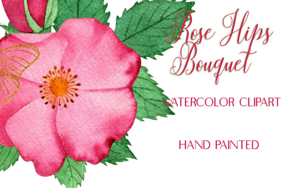 Watercolor Pink RoseHips Bouquet ClipArt Graphic Illustrations By outlander1746