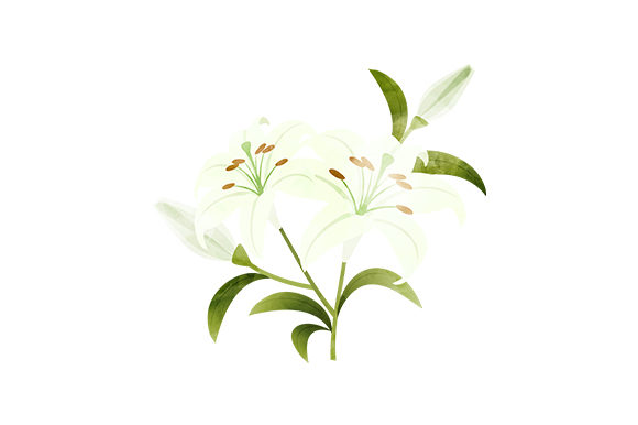 White Lilies Nature & Outdoors Craft Cut File By Creative Fabrica Crafts