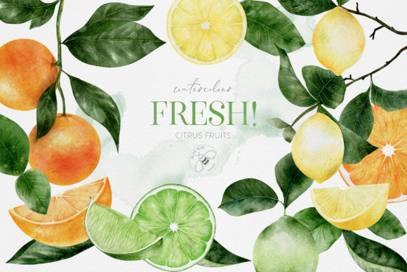 Fruit Watercolour Citrus Fruit Lemons Graphic Illustrations By Busy May Studio