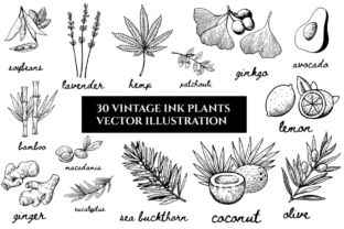 Ink Vector Illustration Whit Plants Graphic Illustrations By y.kachan87