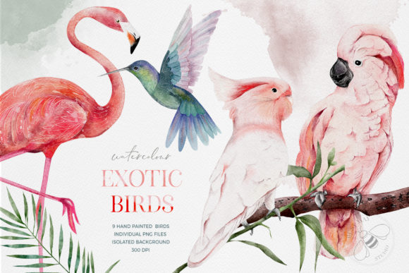 Watercolor Exotic Birds Tropical PNG Graphic Illustrations By Busy May Studio