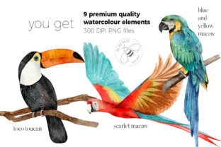 Print on Demand: Watercolor Exotic Birds Tropical PNG Graphic Illustrations By Busy May Studio 5