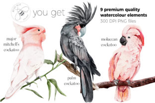 Print on Demand: Watercolor Exotic Birds Tropical PNG Graphic Illustrations By Busy May Studio 6