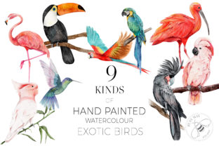 Print on Demand: Watercolor Exotic Birds Tropical PNG Graphic Illustrations By Busy May Studio 7