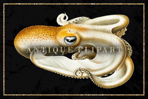 Print on Demand: Octopus Vintage Illustration Graphic Illustrations By Sabina Leja