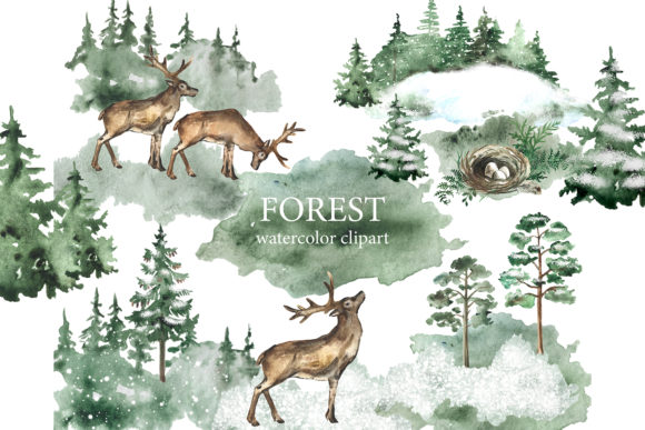 Watercolor Forest Clipart. Landscap. Graphic Illustrations By EvArtPrint