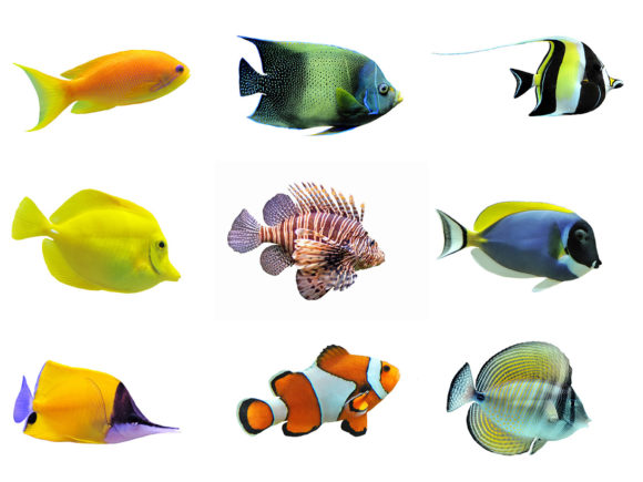 Collection of a Tropical Fish on a White Graphic Animals By impresstore