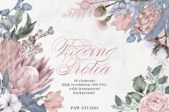 Print on Demand: Wedding Protea Cotton Flowers Clipart Graphic Illustrations By PawStudio