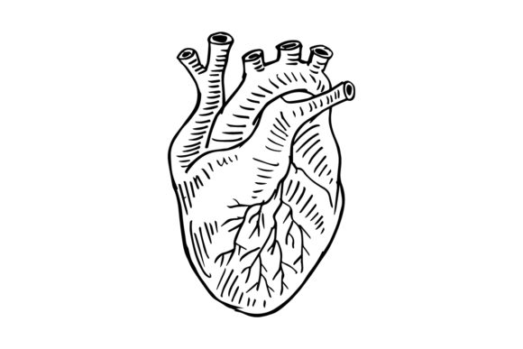 Human Heart Hand Drawing Illustration. Graphic Illustrations By han.dhini