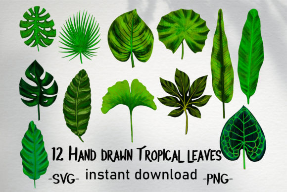 Print on Demand: Hand Drawn Tropical Leaves Bundle Graphic Illustrations By Gennadii ART
