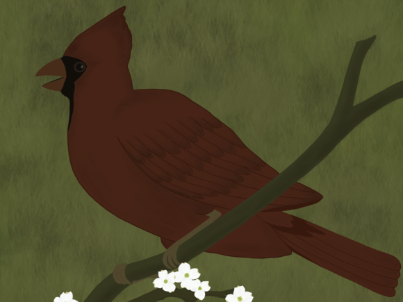 Red Cardinal Bird Graphic Illustrations By Irmasartsandcrafts