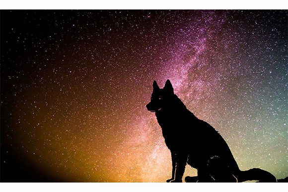 Print on Demand: Dog Wolf Pet Sitting Dark Night Galaxy Gráfico Ilustraciones Por Chiplanay