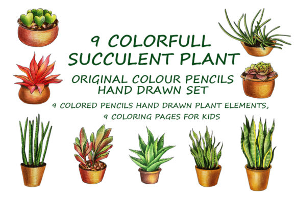 9 Colorfull Succulent Plans Elements Graphic Illustrations By Galarta