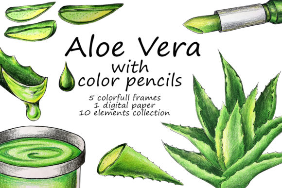 Aloe Vera with Colored Pencils Drawing Graphic Illustrations By Galarta