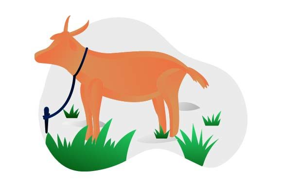 Print on Demand: Goat Flat Illustration Graphic Illustrations By pnajlab