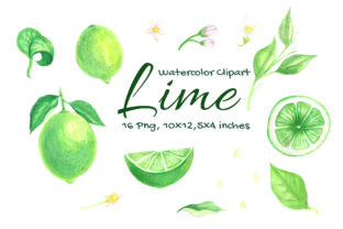 Lime Watercolor Fruit Slice Citrus Graphic Objects By artpanda2018