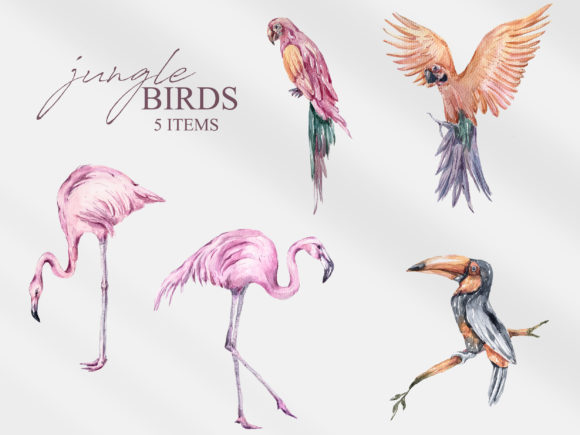Print on Demand: Watercolor Tropical Birds Clipart Graphic Illustrations By Tiana Geo