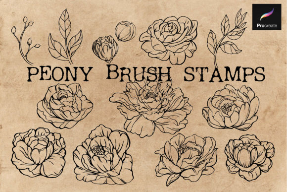 Print on Demand: Procreate Brush Stamps-Peony Hand Draw Graphic Brushes By KtwoP