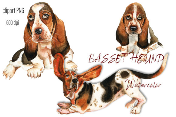 Print on Demand: Basset Hound Watercolor. Portrait  Dog Graphic Illustrations By ElenaZlataArt