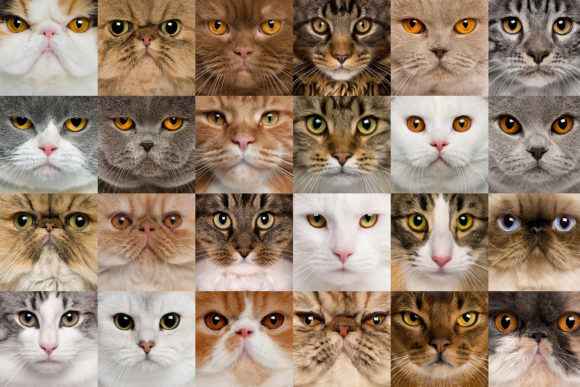 A Variety of Cat Face Graphic Animals By impresstore