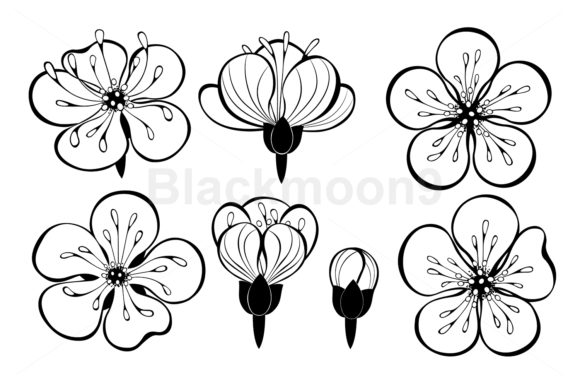 Set of Outline Sakura Flowers Grafik Illustrationen von Blackmoon9