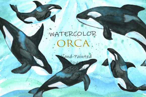 Watercolor Orca  Ocean Watercolor  Orca Graphic Illustrations By SavirinaArt