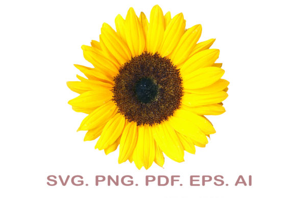 Sunflower SVG Graphic Crafts By NarCreativeDesign
