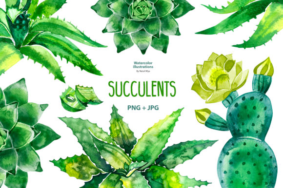Watercolor Succulents Set Graphic Illustrations By NataliMyaStore