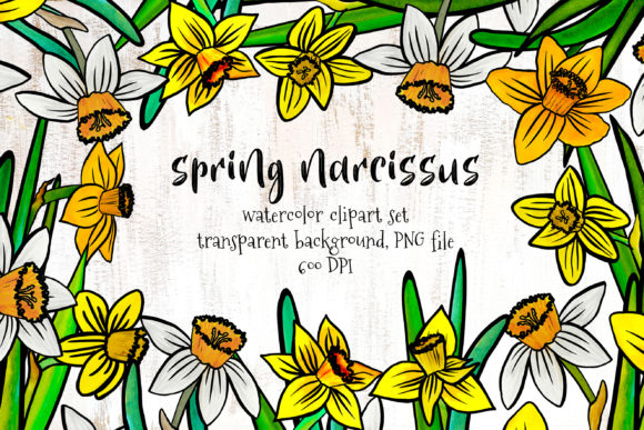 Print on Demand: Spring Narcissus Graphic Illustrations By Sadalmellik watercolor