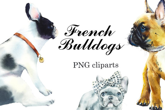 Watercolor Clipart French Bulldogs Graphic Illustrations By Мария Кутузова