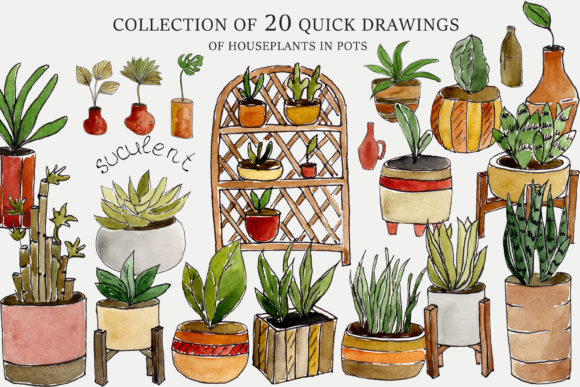 Collection of 20 Drawings House Plants Graphic Illustrations By Julia Bogdan