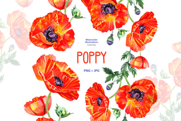 Watercolor Poppy - Floral Clipart Graphic Illustrations By NataliMyaStore