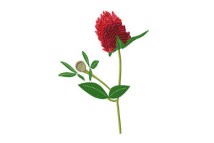 Print on Demand: Red Clover Flower Single Flowers & Plants Embroidery Design By EmbArt