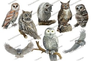 Print on Demand: Owls in the Forest Watercolor Clipart Graphic Illustrations By Marine Universe 2