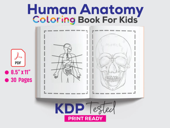 Human Anatomy Coloring Page KDP Interior Graphic KDP Interiors By GraphicTech360